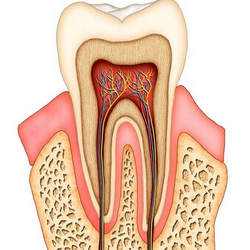 canal de dente
